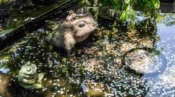 Geld-Gluecklichsein-Frosch-Brunnen-Geld-pond