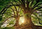 Wald-Geheimnisse-Selbstfindung-tree