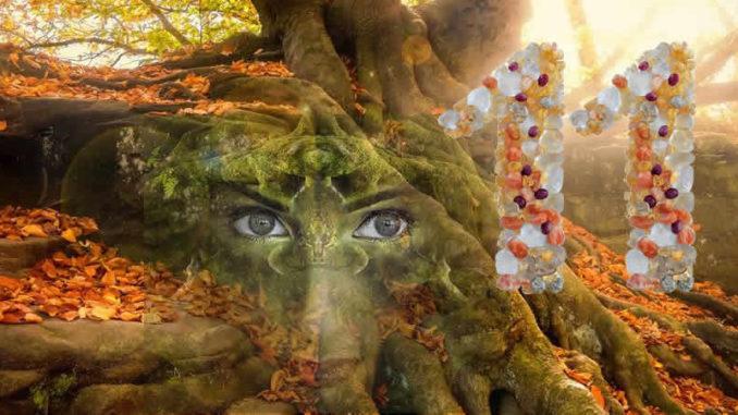 Wuest-doppelt-baum-gesicht-tree