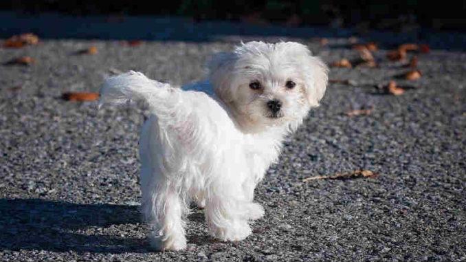 kleiner-weisser-hund-Tier-Seele-Tierkommunikation-dog