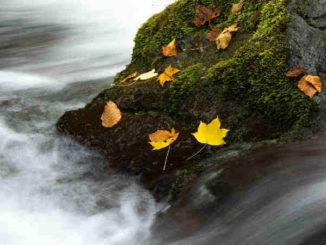 wasser-stein-blaetter-meditation-landscape