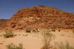 Kamel-Gruppe-Limberger-Sinai-Reise
