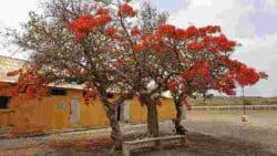 Reisebericht-Kapverden-Ethno-Tours-3