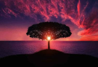 baum-rot-wandel-tree
