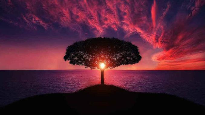 Unmögliches-baum-rot-wandel-tree