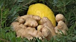 tanne-ingwer-zitrone-ginger