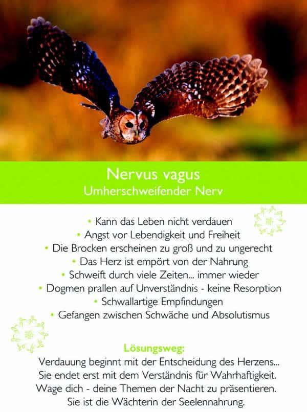 kim-fohlenstein-Kamphausen-Nervus-vagus