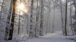 Wintermüdigkeit-Schnee-wald-sonne-baeume-snow