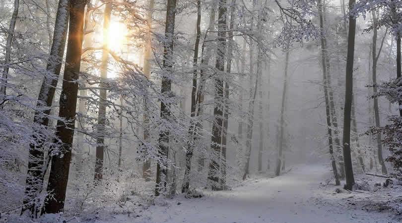 Schnee-wald-sonne-baeume-snow