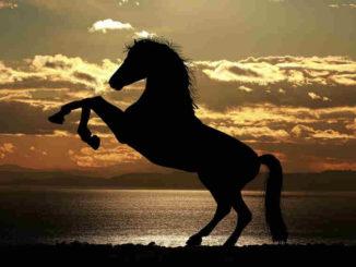 Tier-Coach-Spiegel-steigendes-Pferd-horse