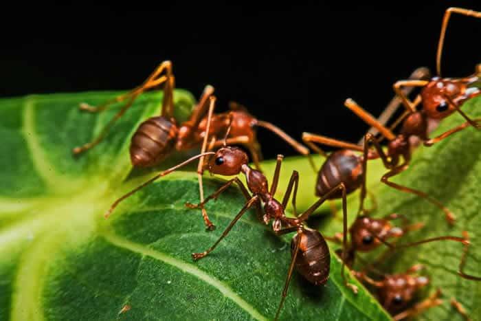 parasitenfrei-ameisen-NG