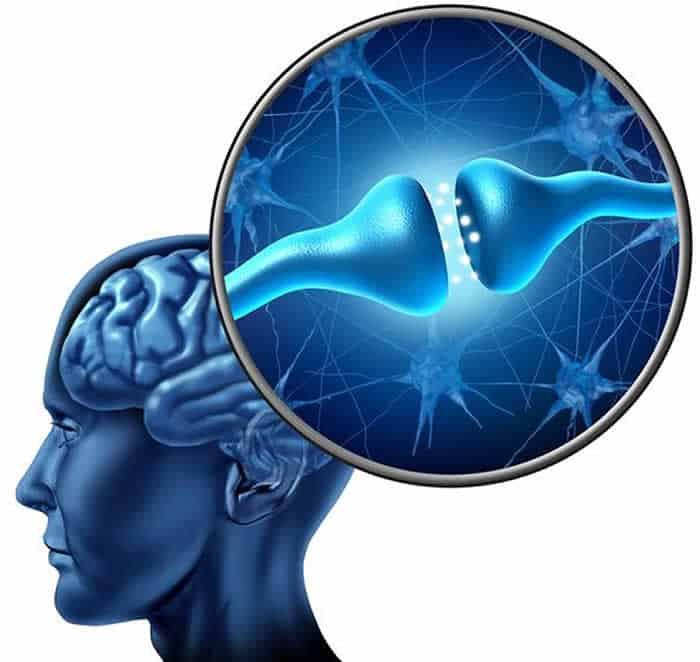 parasitenfrei-synapsenumbau