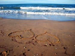 herzen-sand-meer-heart