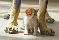 katze-hundebeine-cat