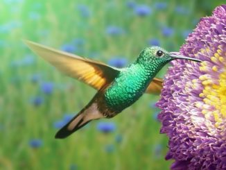 kolibri-blume-zugang-zu-sich-selbst-flower