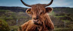 astrologie-mai2020-stier-beef