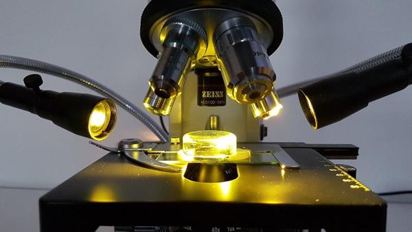 Mikroskop-Rainer-Niederkofler