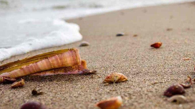 meer-strand-muscheln-beach