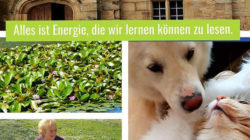 Fachqualifikation-EnergetikSeminar-Ute-Freyaldenhoven