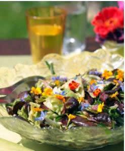 Neutzler-Sommersalate-1