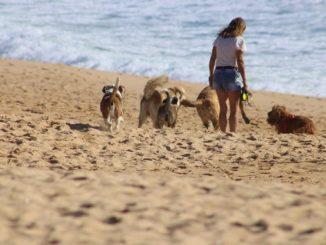 hunde-strand-frau-begegnung-dogs