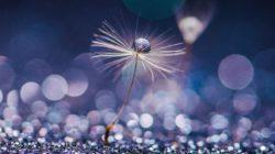Astrologische Montastrends August 2020-lila-blume-flower