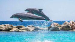springende-delfine-meer-dolphins