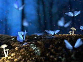 Traumdeutung Schmetterlinge