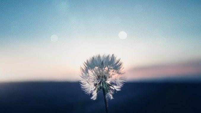 blume mit blauem himmel und runden sonnenreflexen