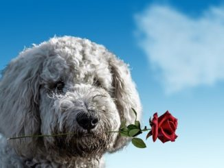 hund rose vergebung herz am himmel
