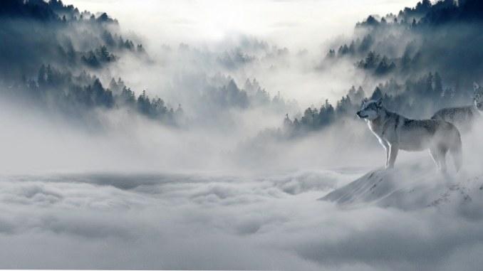 nebel-huegel-wolf