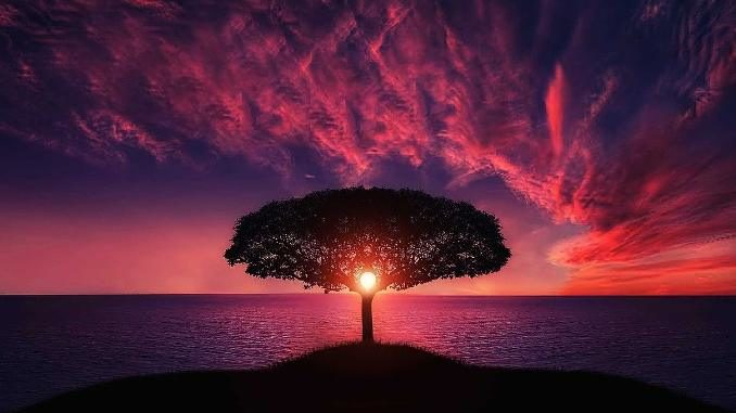 Baum-am-Meer-im-Abendrot-tree