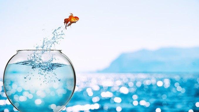 Fisch springt aus Glas menzel