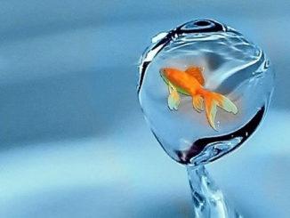 Fisch-tropfen-freiheit