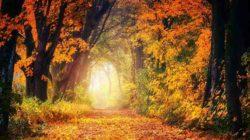 Seelisches Verlangen Herbst Wald Licht