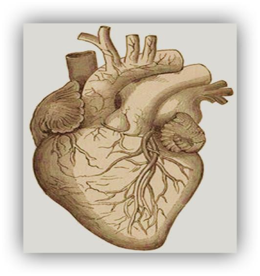 Herz-Mehrdad-Noorani