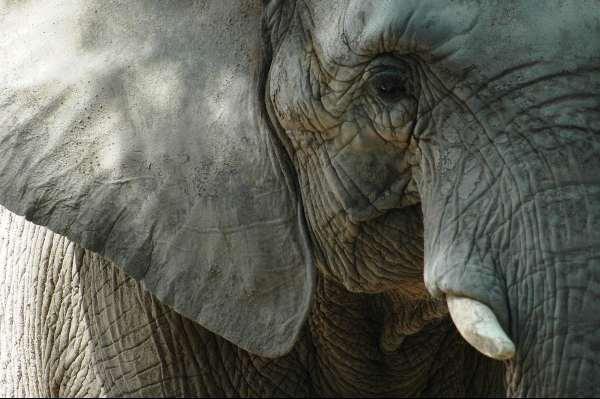 Denkanstöße durch Naturerlebnisse kopf elephant