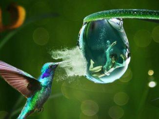 kontrolle Vogel Wasserblase mit Mensch rescue
