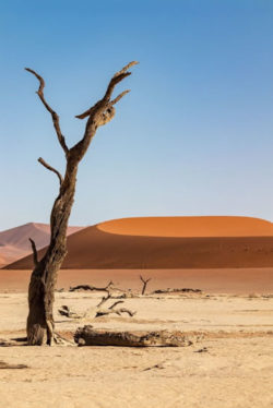 Reise-Namibia-2021-Barbara-Bessen-Sossusvlei