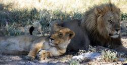 Reise-Namibia-2021-Barbara-Bessen-loewen
