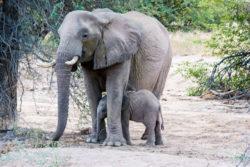 Reise-Namibia-2021-Barbara-Bessen-Elefanten