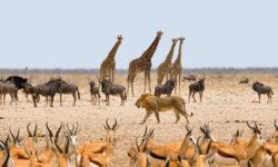 Reise-Namibia-2021-Barbara-Bessen-Etosha