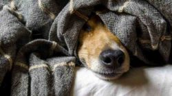 angst-hund-dog