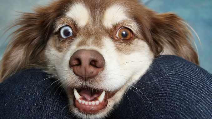 hund-kopf-dog