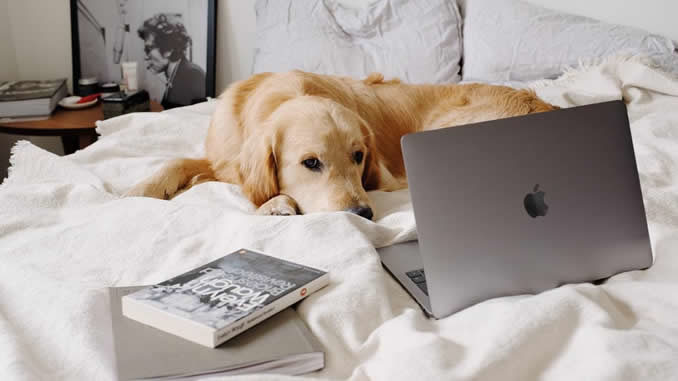 hund-laptop-bett