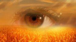 selbsterkenntnis-auge-feld-eye