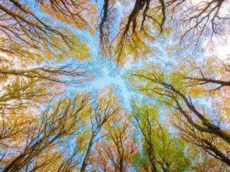 synchronizitaet-baeume-herbst-himmel-trees
