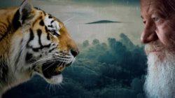tierkommunikation-tiger