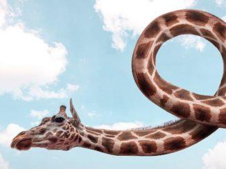 verdrehte-tatsachen-giraffe