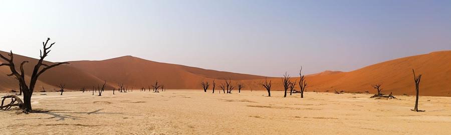 Reise-Namibia-2021-Barbara-Bessen-abgestorbene-Baeume